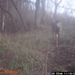 Another Good Young Buck